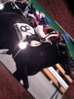 お馬と写真